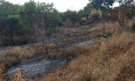 Denunciaremos por quema y tala de mangle: Ayuntamiento de San Rafael